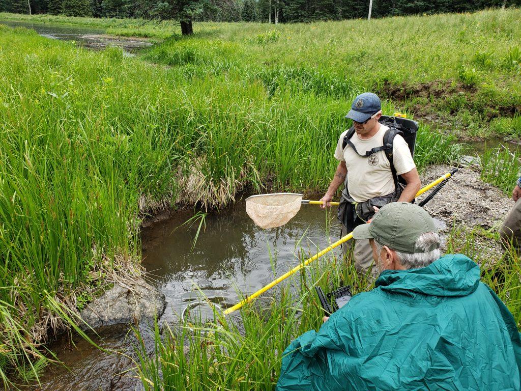 Cutthroat trout survey