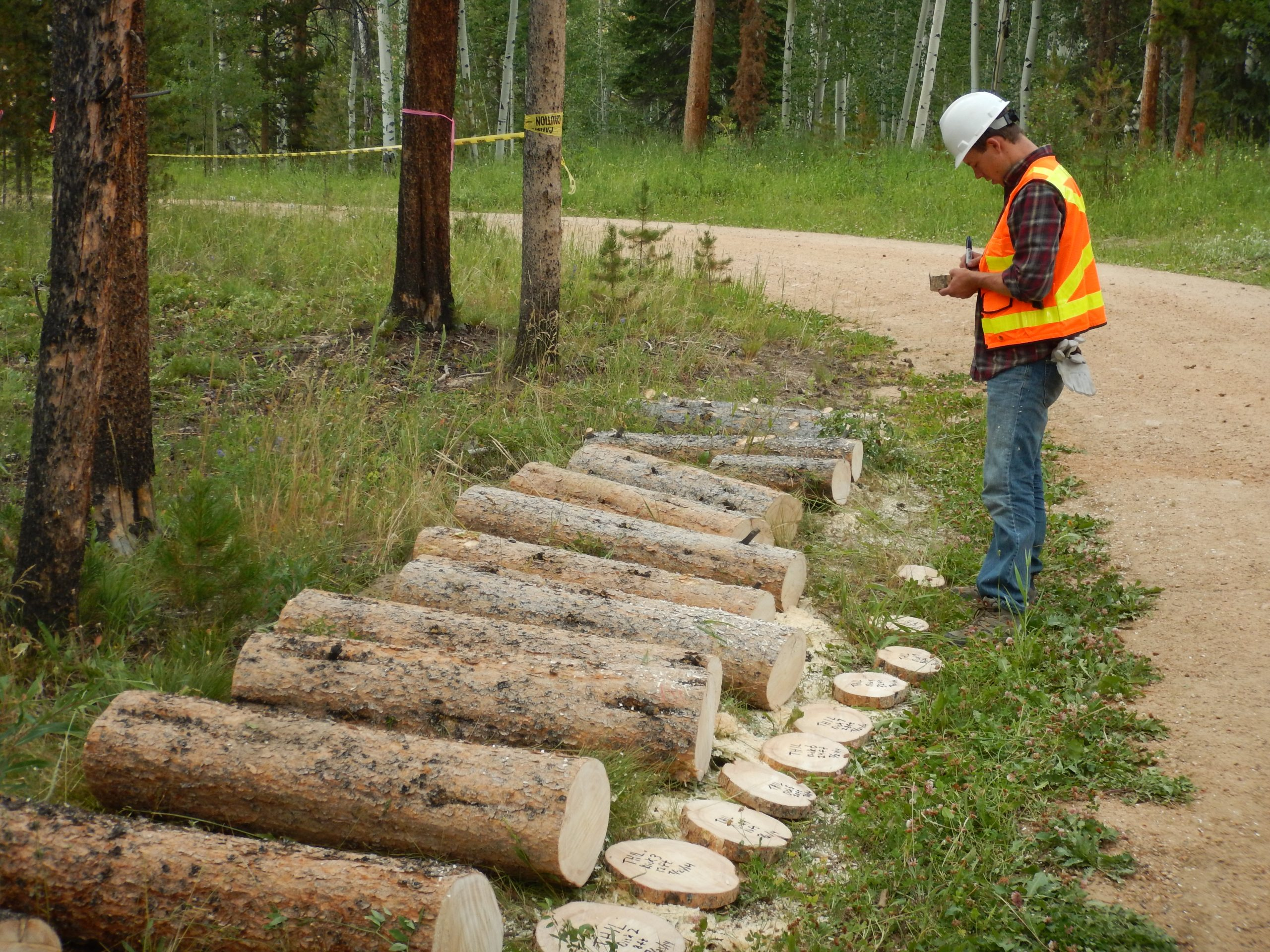 Researching bark beetle impacts on Rocky Mountain forests