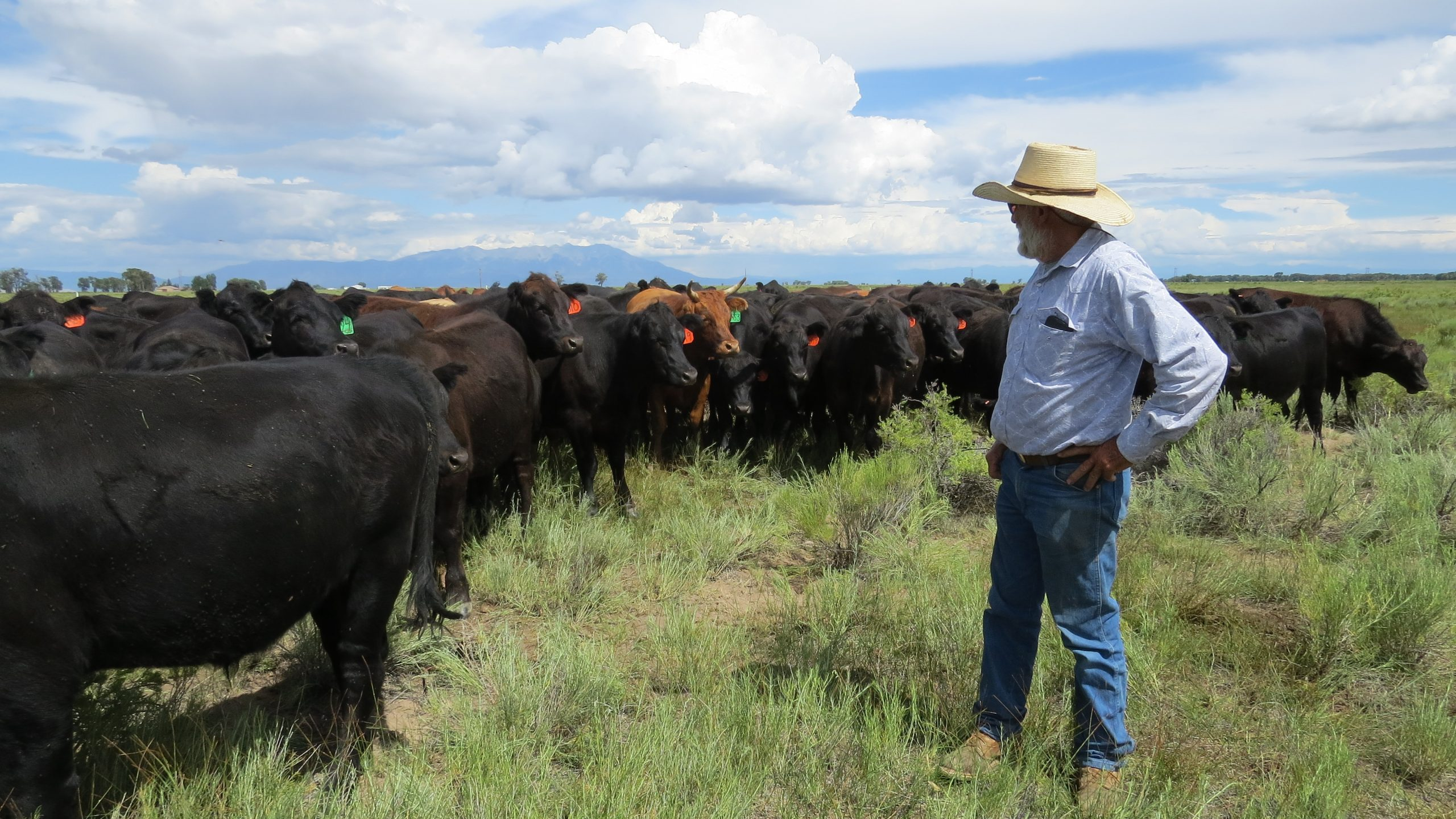 Grazing management in the San Luis Valley CO