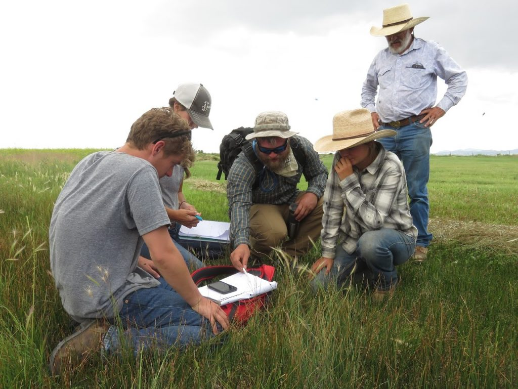 Calculating available forage